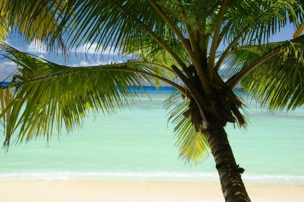 badeurlaub am strand von silhouette island seychellen. Black Bedroom Furniture Sets. Home Design Ideas